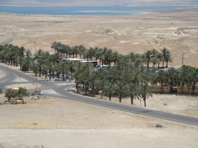 Oasis de Massada